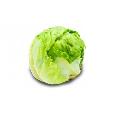 Iceberg Lettuce - Malaysia (1 pc)
