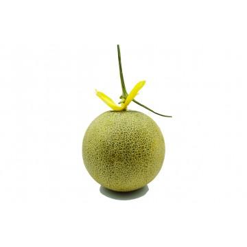 Rockmelon - Vietnam (1 pc)