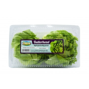 Butterhead Lettuce Pack - Malaysia (300 gm)